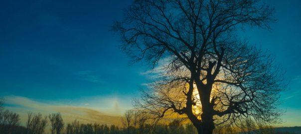 Copacul lui Dragoș Grijincu